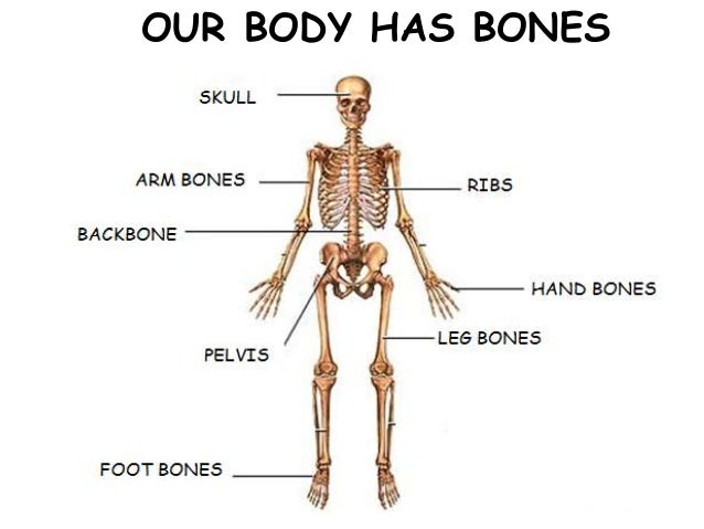 Name Of Joints In Human Body Study Best Photo Gallery For Website ...