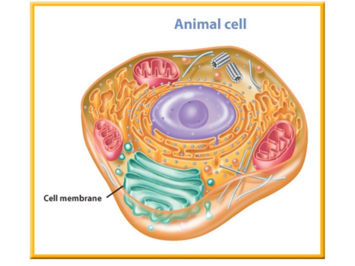 3d Plant Cell Diagram Labeled Electrical Work Wiring Diagram