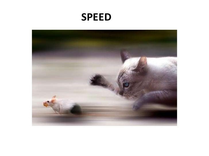 SPEED<br />