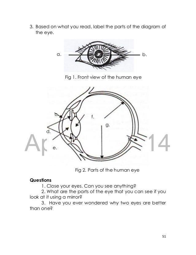 Eye diagram for grade 2 auto electrical wiring diagram label parts of the eye worksheet grade 2 rh aujsa com ear diagram tongue diagram ccuart Gallery