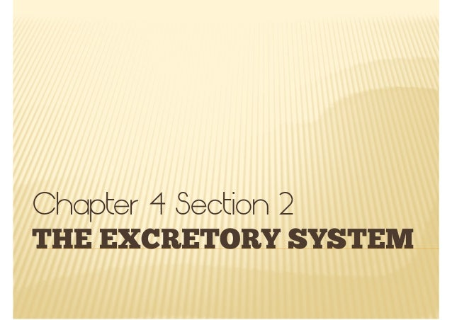 THE EXCRETORY SYSTEMChapter 4 Section 2