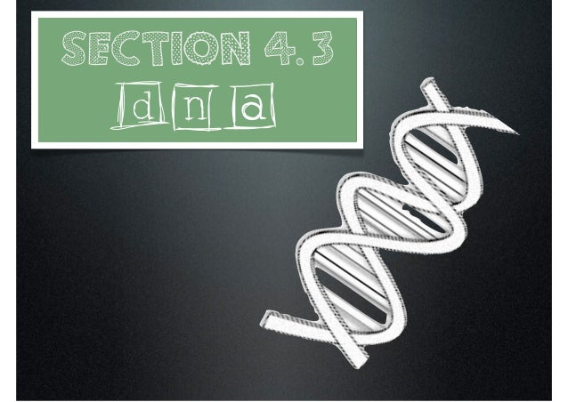 Section 4.3  DNA