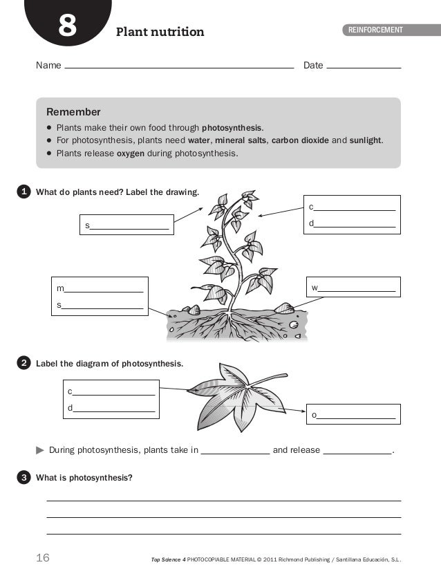 Photosynthesis Worksheets Pdf photosynthesis and respiration – Photosynthesis Worksheet Middle School