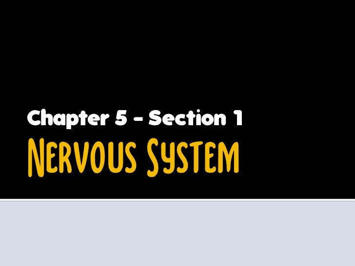 Chapter 5 - Section 1Nervous System
