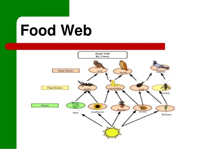 Sand Cat Food Web