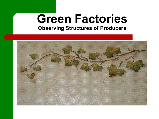 Green FactoriesObserving Structures of Producers