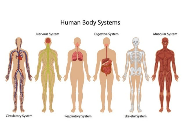 Science body systems year 3 easy