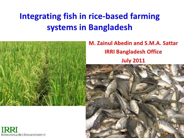 Integrating fish in rice-based farming systems in Bangladesh<br />M. Zainul Abedin and S.M.A. Sattar<br />IRRI Bangladesh ...