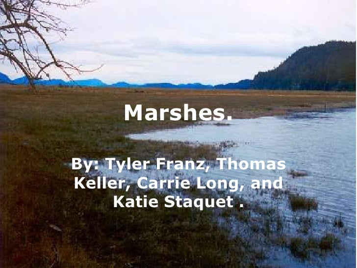 Marshes.<br />By: Tyler Franz, Thomas Keller, Carrie Long, and Katie Staquet.<br />