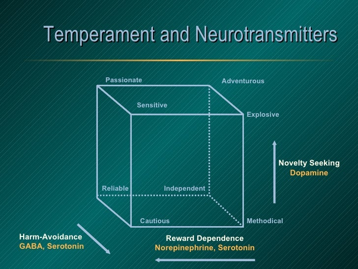 Temperament and Neurotransmitters Explosive Adventurous Passionate Sensitive Methodical Cautious Reliable Independent Harm...