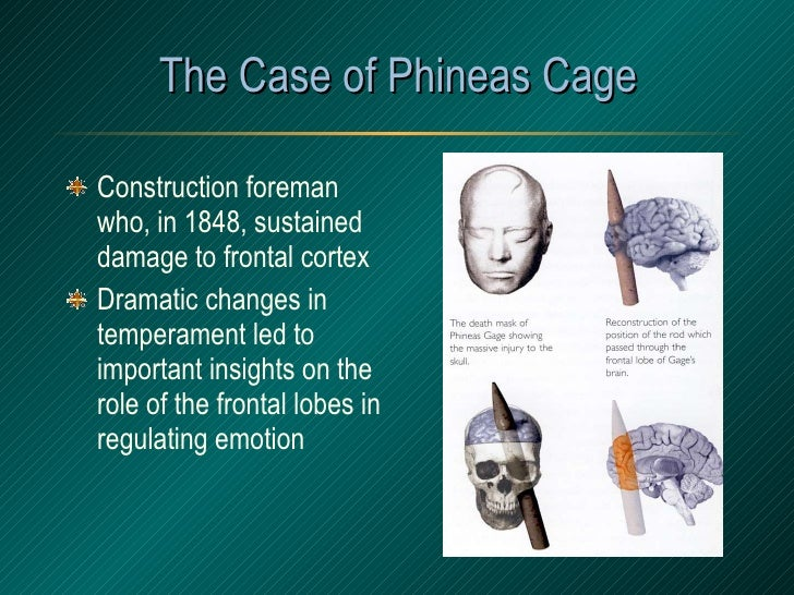The Case of Phineas Cage <ul><li>Construction foreman who, in 1848, sustained damage to frontal cortex </li></ul><ul><li>D...