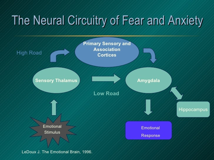 The Neural Circuitry of Fear and Anxiety LeDoux J. The Emotional Brain, 1996. Emotional Stimulus Sensory Thalamus Amygdala...