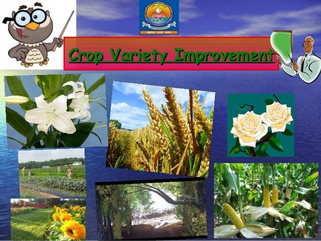 Crop Variety Improvement