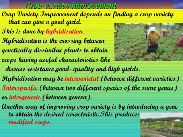 crop variety improvement Ncert class ix science chapter 15 improvement in food resources chapter 15 – improvement in food resources 1511 crop variety improvement.