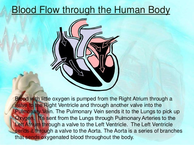 The Heart Science 7th class powerpoint presentation
