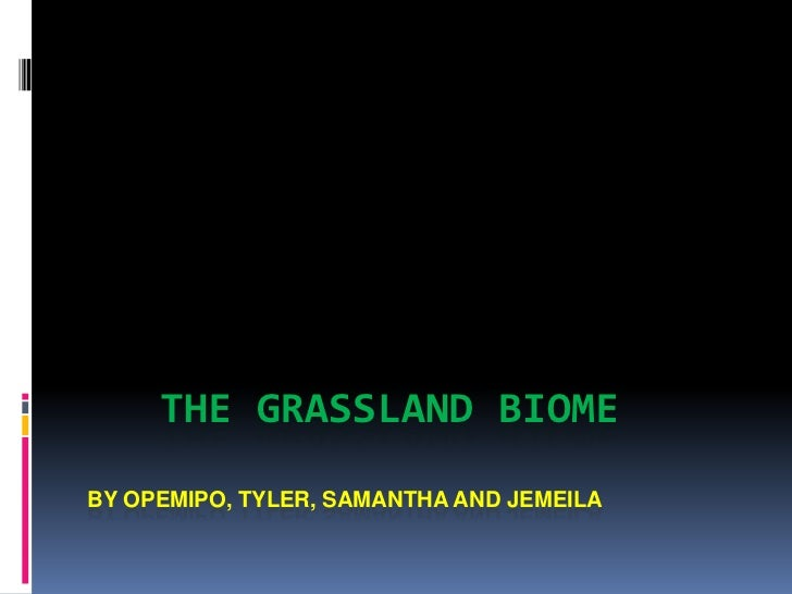 THE GRASSLAND BIOMEBY OPEMIPO, TYLER, SAMANTHA AND JEMEILA<br />