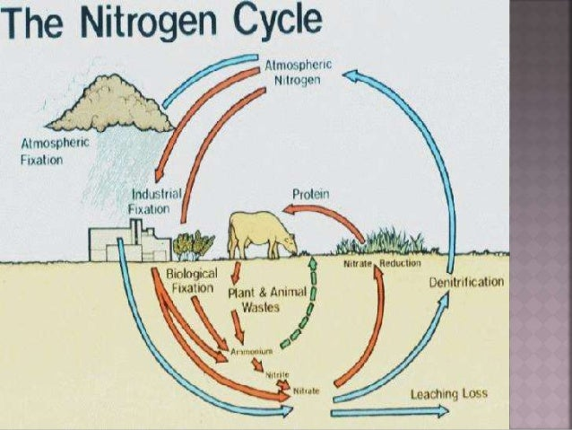 Why is the process of nitrogen fixation important
