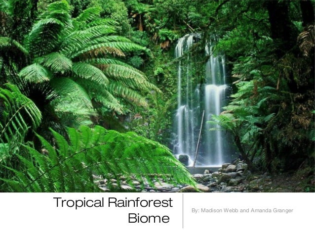 ecosystem of the rain forest Other temperate rain forests  precipitation in olympic's rain forest  trails and access roads offer visitors a way to explore of this verdant ecosystem.