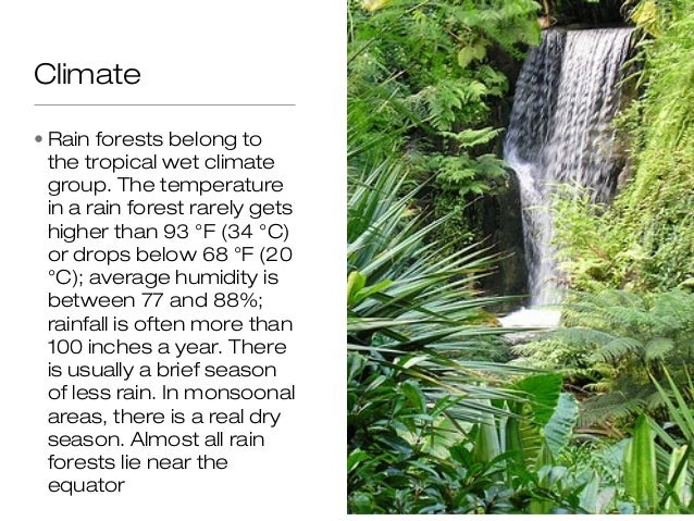 Rainforest biome climate rain forests belong to the freerunsca Choice Image