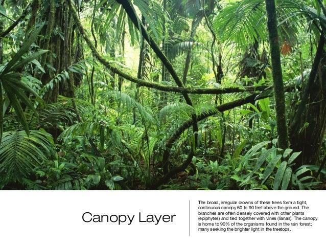 8. & Rainforest Biome