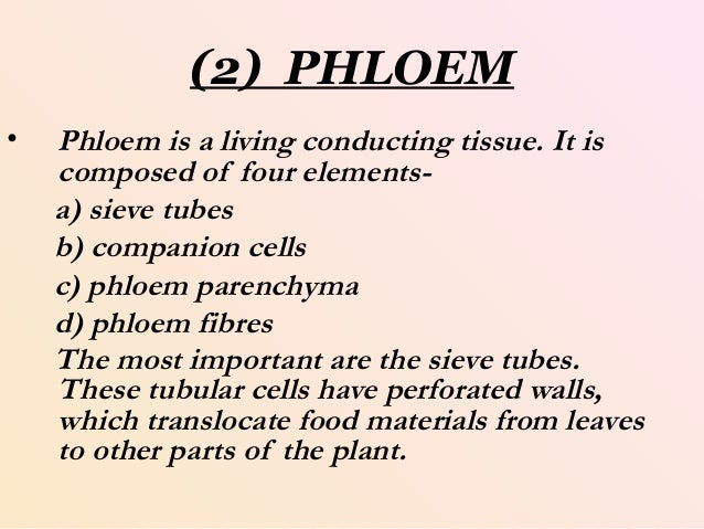 importance of xylem and phloem tissues essay A summary and statistical re-evaluation of modelling experiments in ricinus  communis  flows in xylem and phloem were modelled according to an  empirically-based  from root tissue to the xylem and from leaves to the phloem   the importance of p in plant metabolism is due to its function in nucleic.