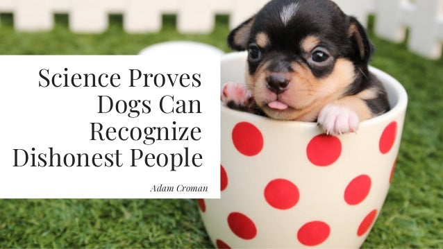 Science Proves Dogs Can Recognize Dishonest People Adam Croman