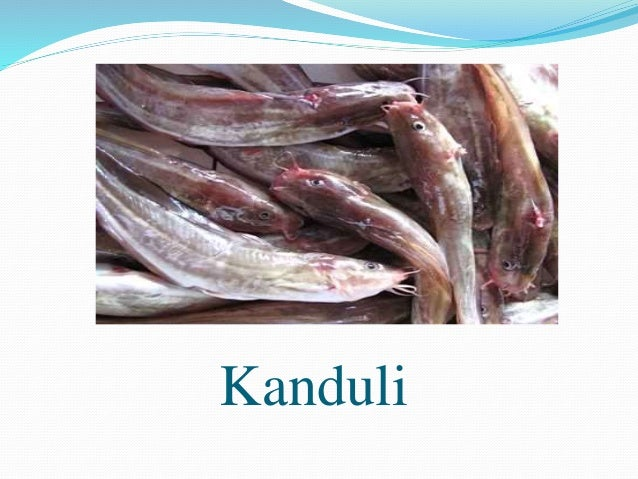 Philippine Fish Species - List of Common Fish in the Philippines ...