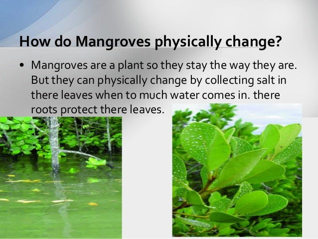 a study of the badu mangrove Object moved this document may be found here.
