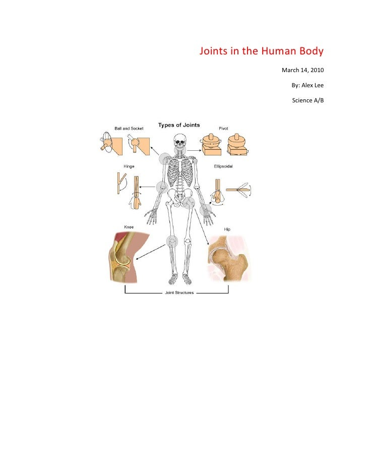 Joints in the Human Body<br />March 14, 2010<br />By: Alex Lee<br />Science A/B<br />1125220186690<br ...