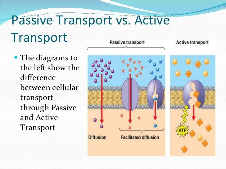 AP Bio Lab 1 - Diffusion & Osmosis