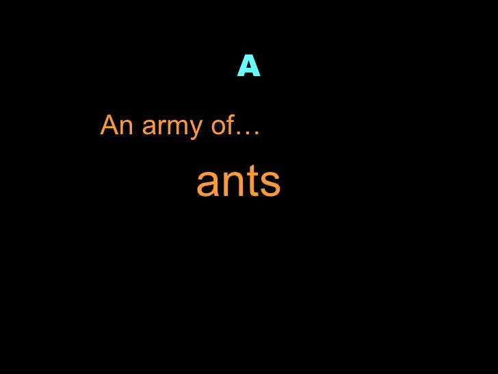 A <ul><li>An army of… </li></ul>ants