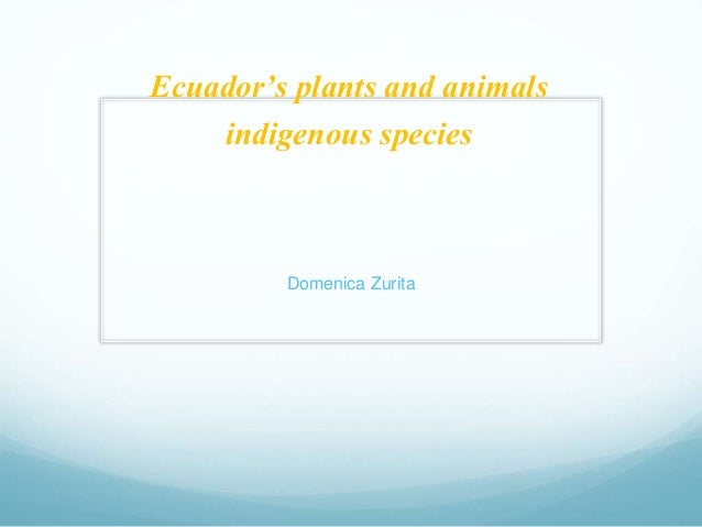 Ecuador's plants and animals  indigenous species  Domenica Zurita