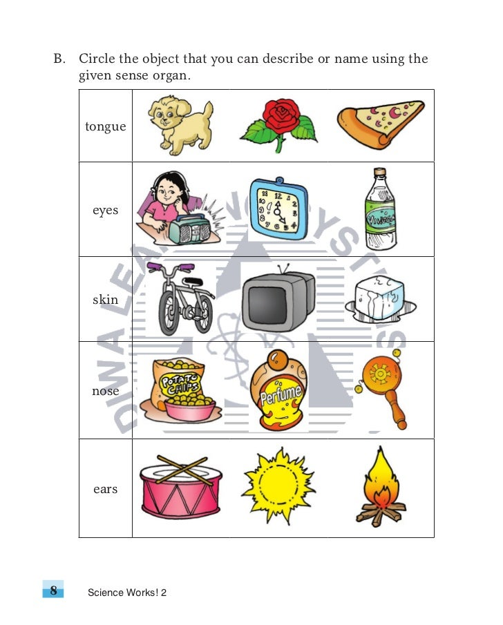 Science Works2 Txprelimswatermark on Science Of Smell Worksheet