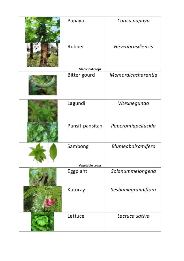 scientific names of plants and animals Home scientific names and classification - natural history notebooks: scientific names and classification - natural history notebooks our species has always needed to name plants and animals that were harvested for food or avoided for survival.