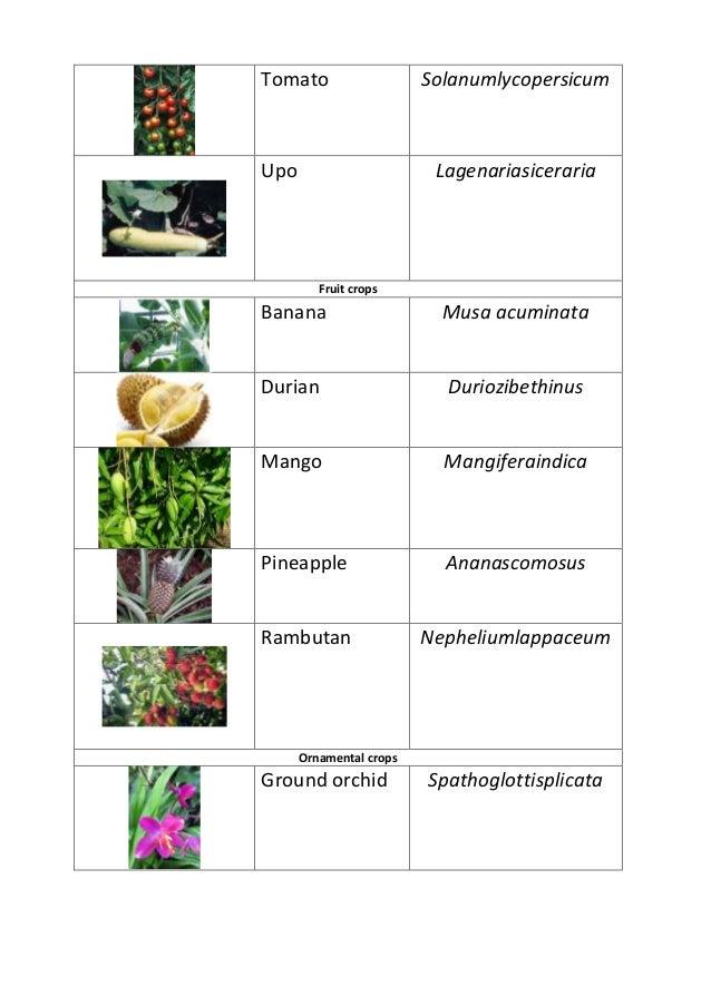 scientific name of fruit trees