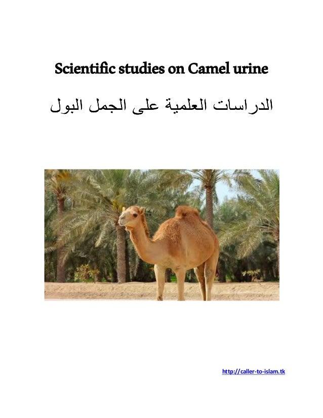 ScientificstudiesonCamelurine http://caller-to-islam.tk