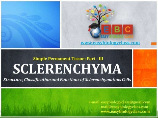 For detailed description of this topic, please click on: http://www.easybiologyclass.com/sclerenchyma-structure-classifica...