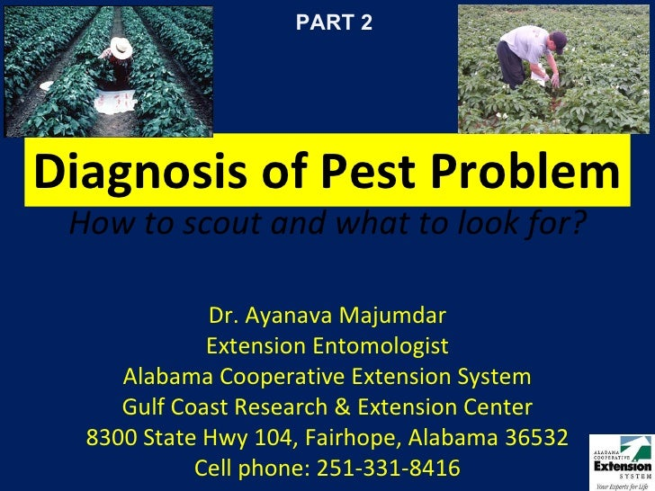 Diagnosis of Pest Problem How to scout and what to look for? Dr. Ayanava Majumdar Extension Entomologist Alabama Cooperati...