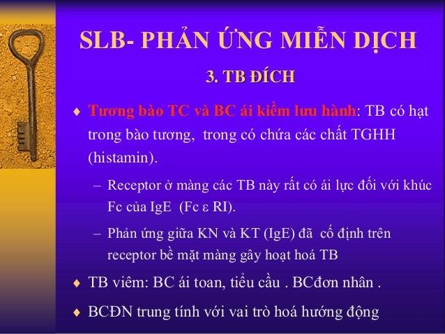 SLB- PHẢN ỨNG MIỄN DỊCH  Tương bào TC và BC ái kiềm lưu hành: TB có hạt trong bào tương, trong có chứa các chất TGHH (his...