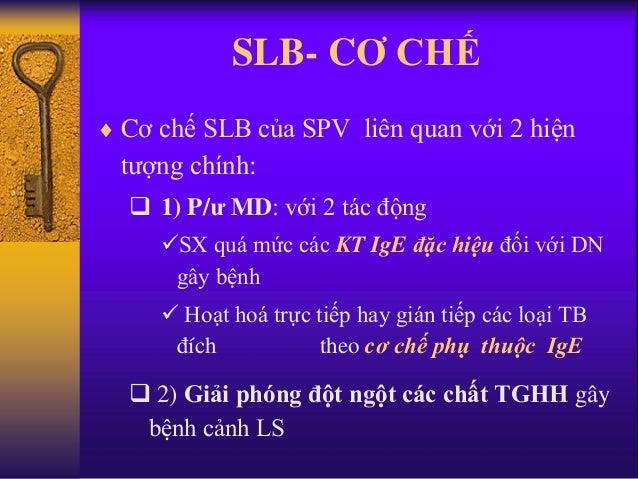 SLB- CƠ CHẾ  Cơ chế SLB của SPV liên quan với 2 hiện tượng chính:  1) P/ư MD: với 2 tác động SX quá mức các KT IgE đặc ...