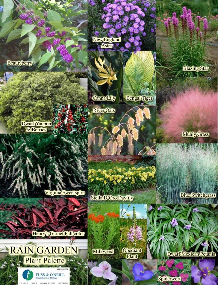 Image Result For How To Start A Learning Garden