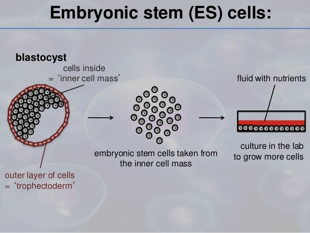 reasons to be against stem cell research Many people believe it is ethically wrong and against god's wishes stem cell research and therapeutic cloning is legal in, the united kingdom.