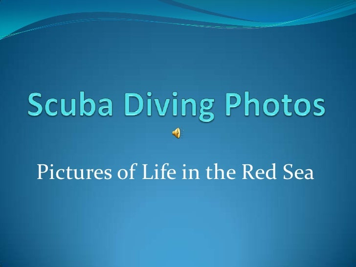Pictures of Life in the Red Sea