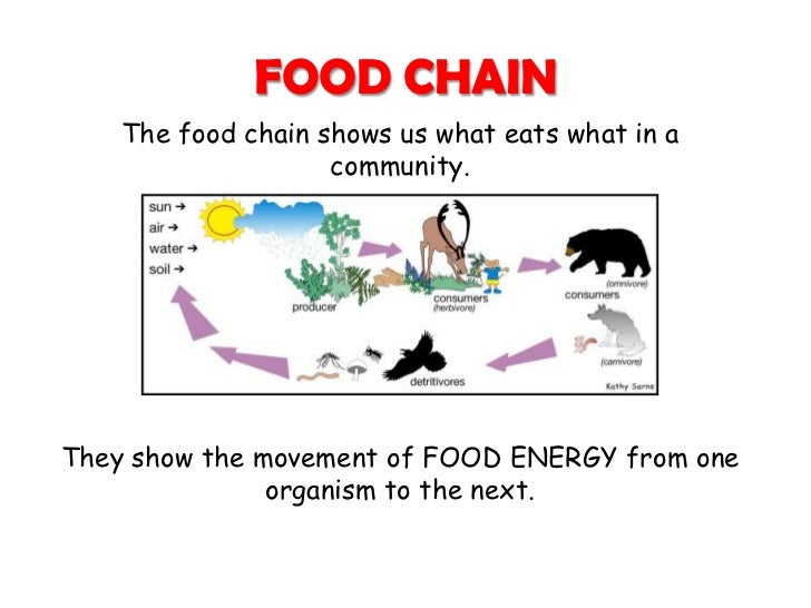 Habitats Food Chain And Food Web on Will You Define Food Chain Web And