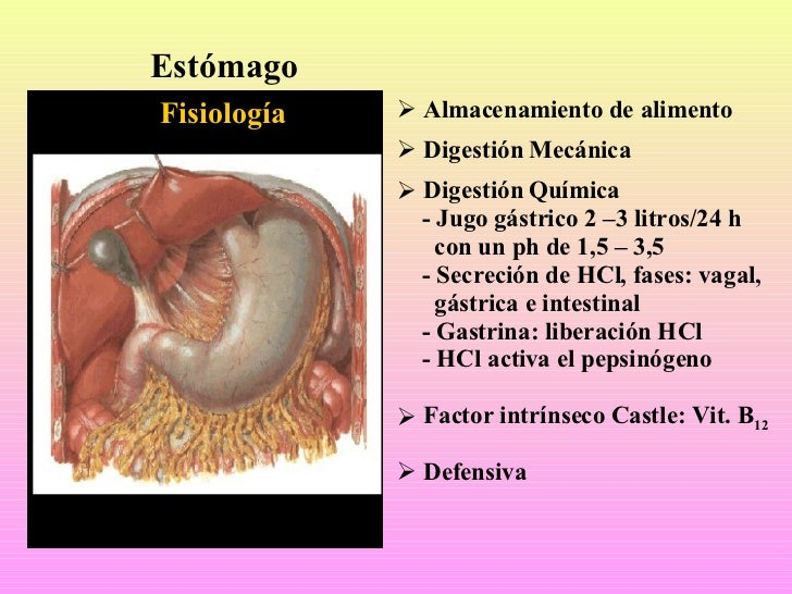 fisiologia digestiva Slide 2