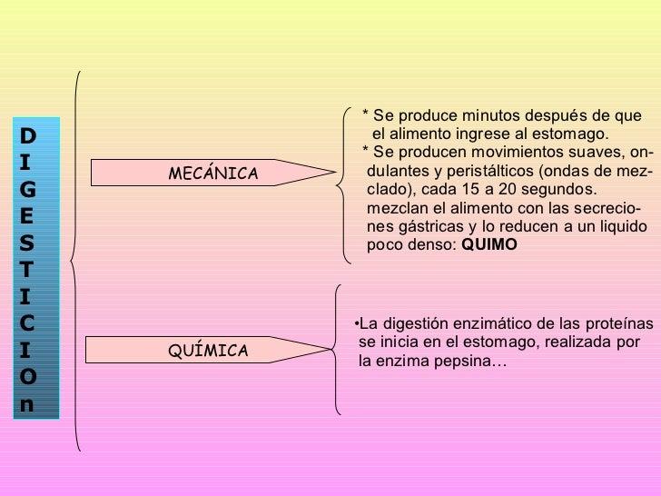 fisiologia digestiva Slide 3