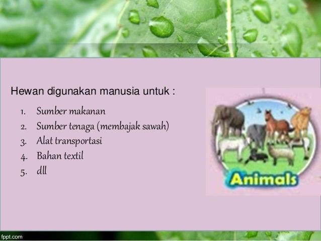 Hewan digunakan manusia untuk : 1. Sumber makanan 2. Sumber tenaga (membajak sawah) 3. Alat transportasi 4. Bahan textil 5...