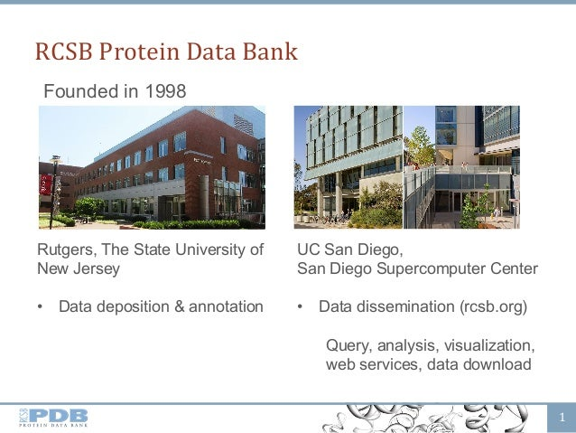 RCSB  Protein  Data  Bank   1   Founded in 1998 Rutgers, The State University of New Jersey • Data deposition &...