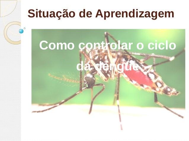 Situação de Aprendizagem Como controlar o ciclo da dengue
