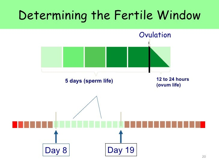 Fertility sperm life